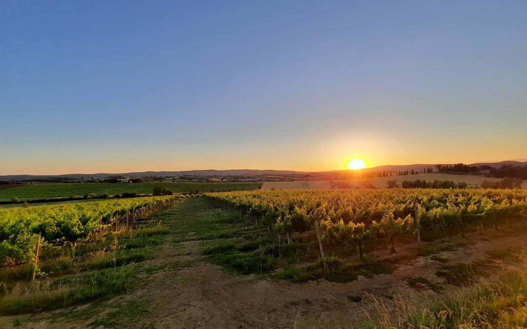 Sunset on vineyards